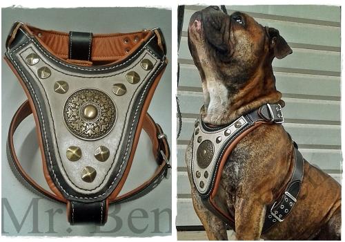 Hundegeschirr aus Leder - Gladiator