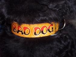 Hundehalsband mit Wunschaufschrift
