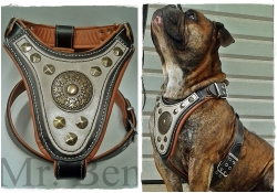 leather dog harness - gladiator