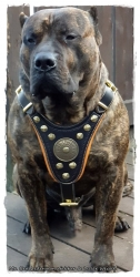 Hundegeschirr aus Leder - OSO